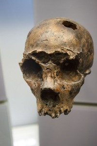 National_Museum_of_Natural_History_(8587341141)