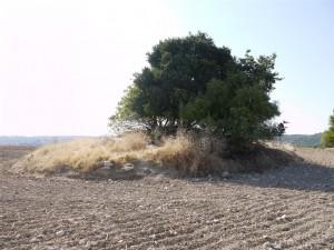 Uno dei tumuli a Setefilla - il sito dal quale i ricercatori polacchi hanno studiato i campioni. Foto di M. Krueger