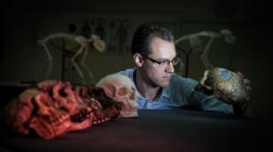 Il dott. Alistair Evans, della Monash University, esamina calchi di crani di ominidi. Credit: David Hocking
