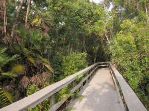 800px-Tropical_hardwood_hammock_on_Everglades_National_Park_Mahogany_Hammock_Trail