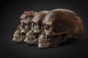 Tre teschi di 31 mila anni fa circa da Dolni Věstonice nella Repubblica Ceca. Credit: Martin Frouz and Jirí Svoboda