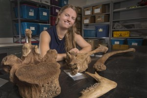 La professoressa Jessi Halligan con ossa e strumenti litici dal sito di Page-Ladson. Credits: Bruce Palmer/Florida State University