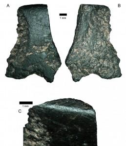 Il più antico frammento d'ascia, qui al microscopio. Credits: Australian Archaeology