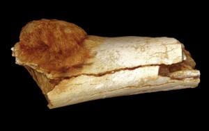 L'osso del piede. Credit: Patrick Randolph-Quinney (UCLAN)