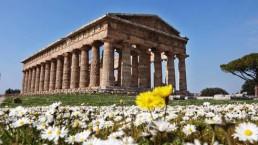 primavera a Paestum