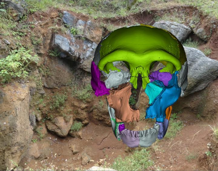 Middle Pleistocene asian Hualongdong
