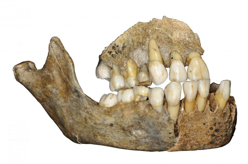 Neandertals Europe
