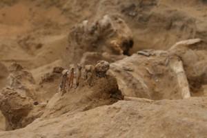 Il defunto nella tomba No. 11. Foto di A. Czekaj-Zastawny