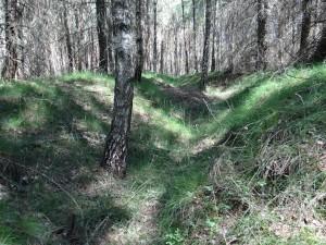 Trincee perfettamente preservate. Foto di Dawid Kobiałka