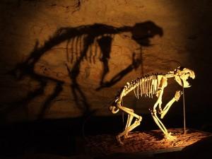 800px-Thylacoleo_skeleton_in_Naracoorte_Caves