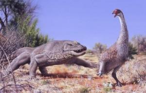 Una illustrazione di un grande uccello incapace di volare, noto come Genyornis newtoni, mentre viene sorpreso nel suo nido da una lucertola predatrice da 1 tonnellata (Megalania prisca) in Australia, grosso modo 50.000 anni fa. Credit: Illustrazione di Peter Trusler, Monash University.