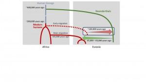 Scenario del mescolamento tra umani e Neanderthal. Il DNA presente nei moderni umani fuori dall'Africa ha la sua origine nel mescolamento tra 47 e 65 mila anni fa (freccia verde). Ma il DNA dei moderni umani nei Neanderthal è probabilmente dovuto a un contatto risalente a 100 mila anni fa (freccia rossa). Credit: © Ilan Gronau