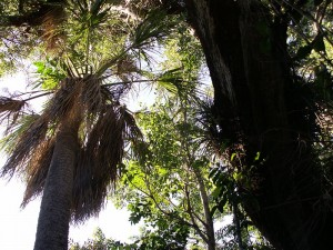 800px-Everglades_Hammock_Center