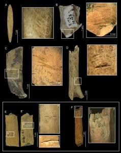 Ossa di cervo nano con segni di macellazione. Gli Archeologi sull'isola Pedro González nella Baia di Panama erano sorpresi di trovare ossa di cervo nano in un cumulo di rifiuti di 6.000 anni fa, prodotto dai residenti che apparentemente causarono l'estinzione dell'animale. Credit: Smithsonian Tropical Research Institute (STRI)