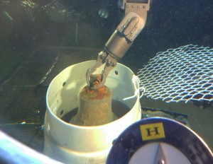 Mano manipolatrice del sommergibile HURL colloca la campana in un cesto di raccolta. Credit: Hawai'i Undersea Research Laboratory, University of Hawai'i