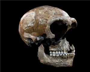 Il collagene dalle ossa dei Neanderthal offre indizi sulla loro dieta. © Bocherens