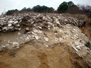 Deposito di ostriche dei Nativi Americani. Credit: Torben Rick