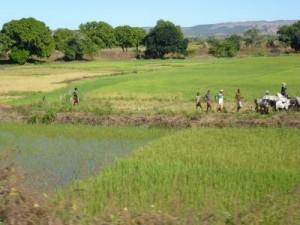 Coltivazioni in Madagascar. Credit: Nicole Boivin