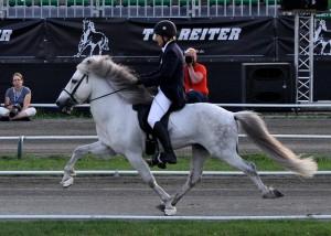 Pony islandese durante i campionati mondiali. Credit: Monika Reissmann