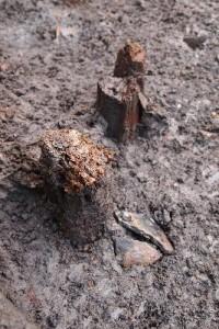 Pali di legno e frammenti ceramici, particolare dallo scavo