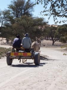 Un carro di ≠Khomani San, trainato da un asino. Photo courtesy of Brenna Henn.