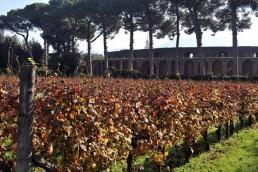 vino Pompei