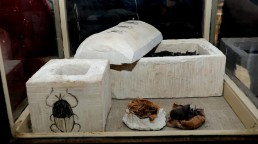 necropoli Saqqara Userkaf piramide mummie animali gatti scarabei coccodrilli serpenti