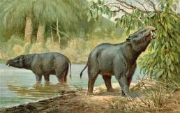 megaerbivori estinzione Africa ominidi