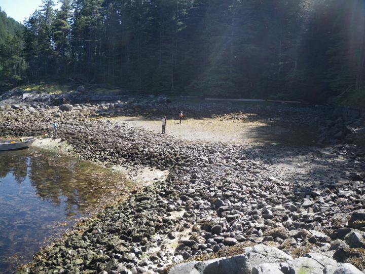 clam gardens Quadra Island British Columbia Northwest Coast peoples