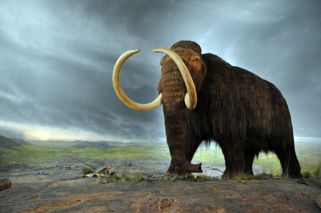 Woolly mammoth Neanderthal genetic traits cold adaptation