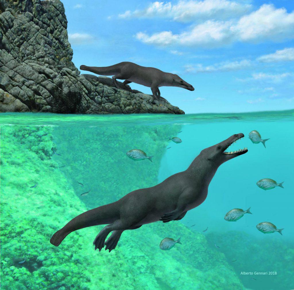 four-legged whale Peregocetus Peru Cetaceans