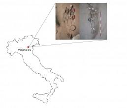 Cenomani Gauls Verona Seminario Vescovile