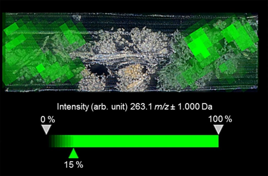 natural dyes imaging mass spectrometry