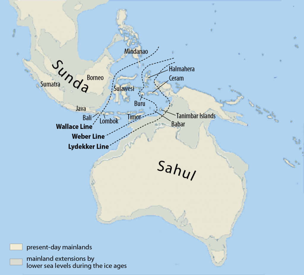biodiversity Borneo Sumatra Java Sundaland Sunda Sahul