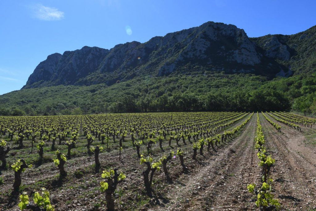 wine France Roman era