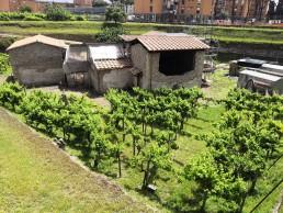 Villa Regina, Boscoreale. Crediti Parco archeologico di Pompei