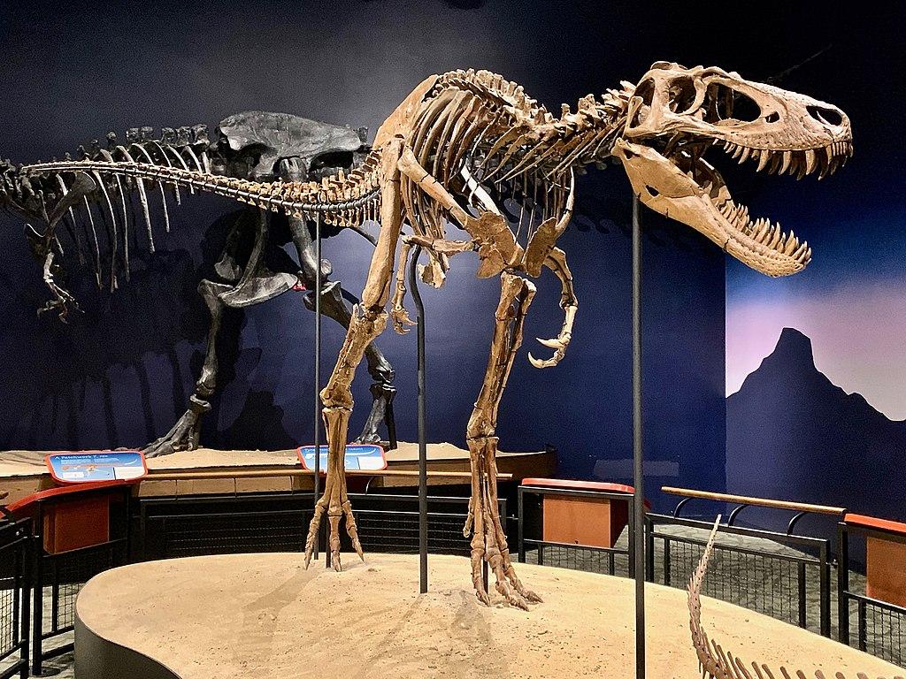 Tyrannosaurus Rex T. Rex Nanotyrannus