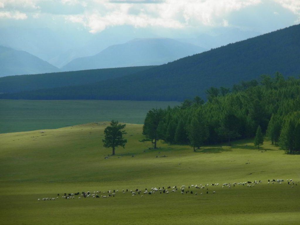 millets Mongolia