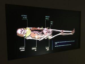Museo Egizio digitale
