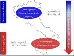 italian genetic