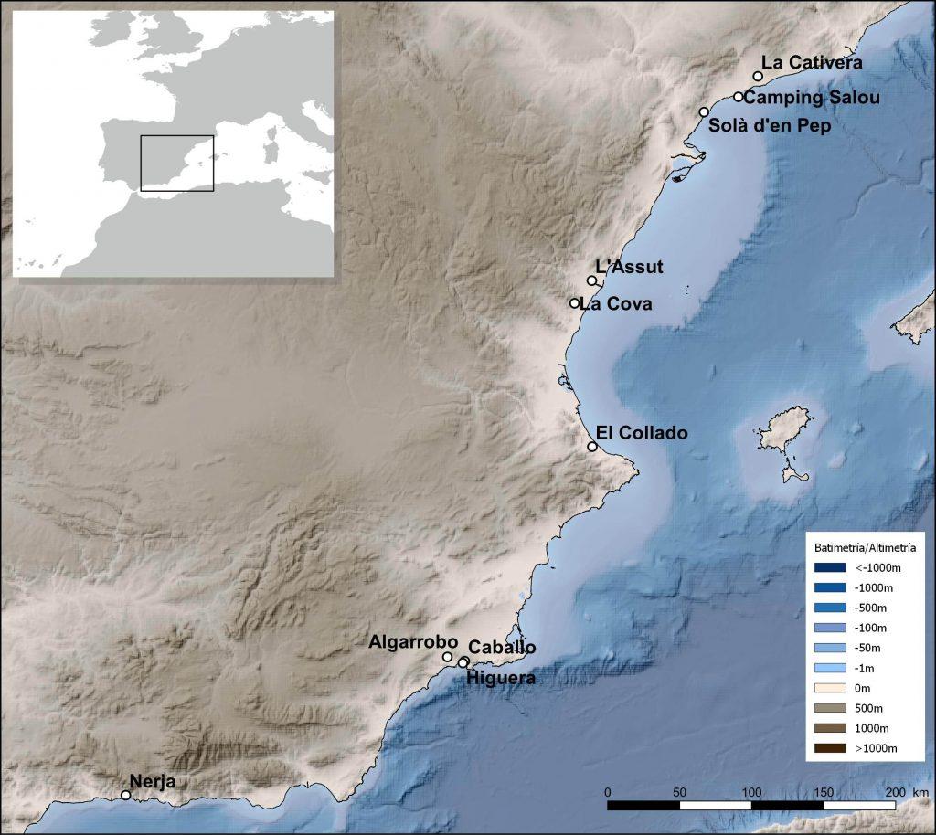 Pleistocene Holocene marine