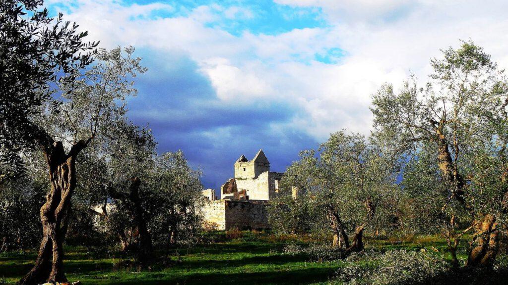 olivicoltura Bitonto